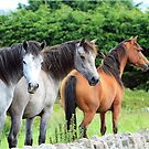 Connemara Ponies in the field by ConnemaraPony