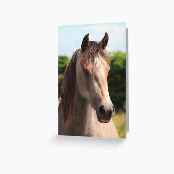 Golden Connemara Pony Mare Greeting Card