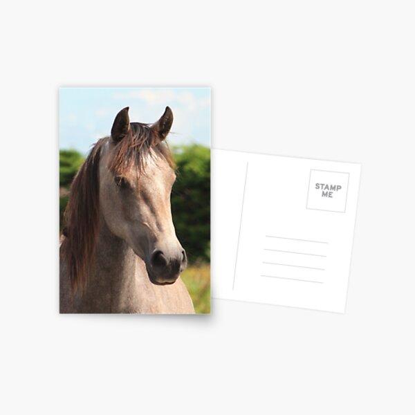 Golden Connemara Pony Mare Postcard