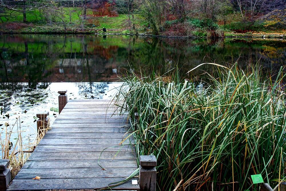 Lake in Copenhagen's Botanical Garden by MartinSar