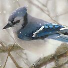 A Blue Gray Day by lorilee