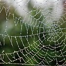 web droplets.. by Michelle McMahon