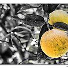 The Orange (Laringa) by NevilleMangion