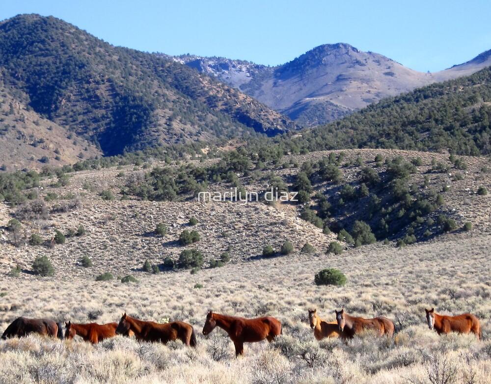 Natural In Nevada by marilyn diaz