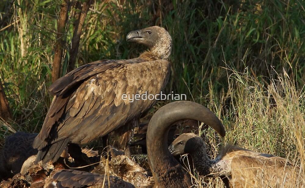 Vultures Feeding - Kruger National Park by eyedocbrian