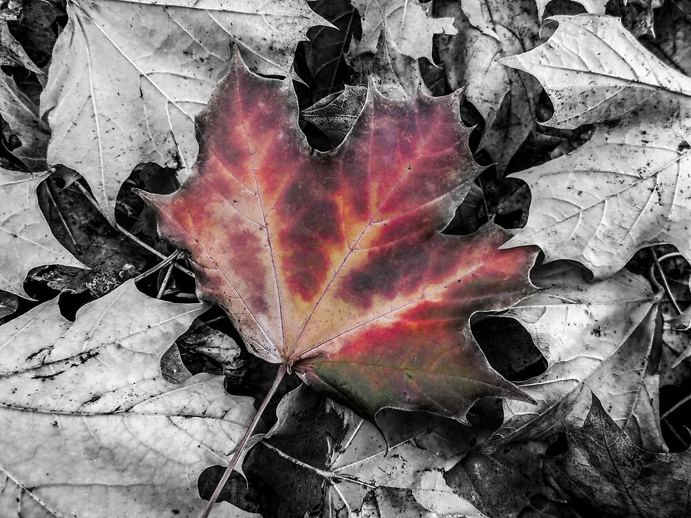 Autumn Leaves by PurestPictures