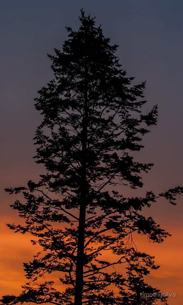 Sunset Silhouette  by timothysilva