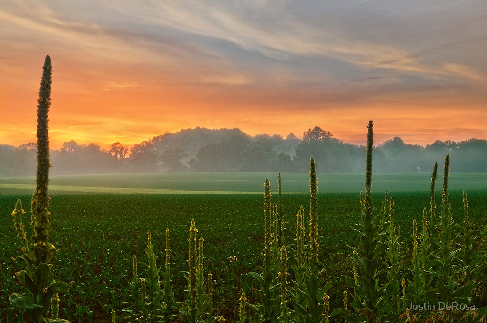 Field Sunset by Justin DeRosa