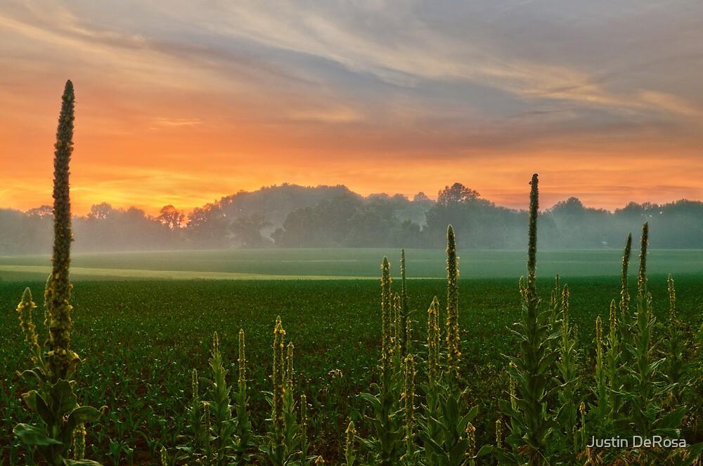 Field Sunset by Justin DeRosa