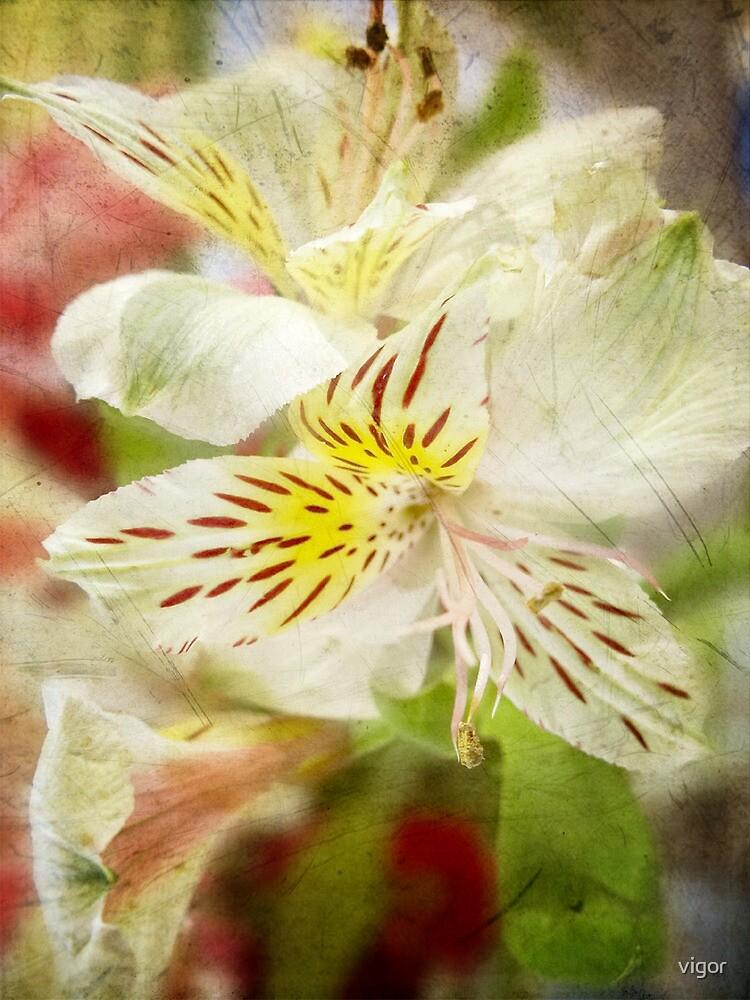 Bouquet Flowers 4 by vigor