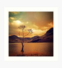 Famous Tree of Lake Buttermere Art Print