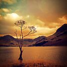 Famous Tree of Lake Buttermere by Nikki Smith (Brown)