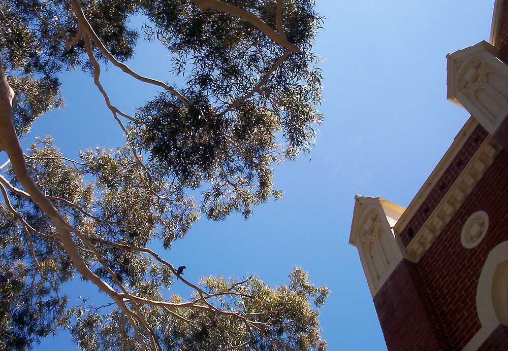Parrot and Church -  26 11 12 - Two by Robert Phillips