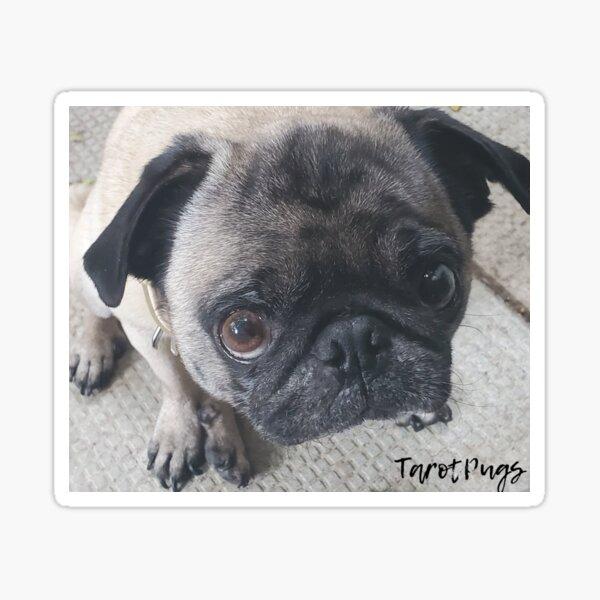 Tarot Pug Rosie Sticker