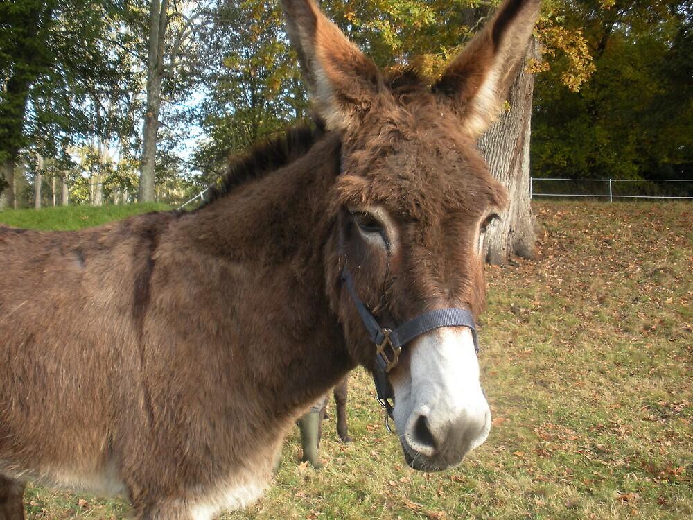 Donkey at Home by dewlish
