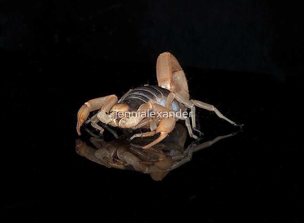 Scorpion by jennialexander