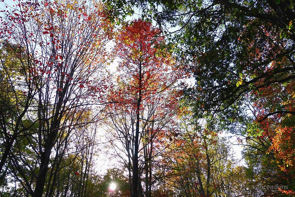 Sunset through fall trees by vanceadkins
