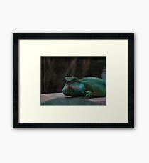 Lizard Iguana Reptile Dragon Framed Print