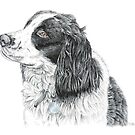 Paddy - King Charles Spaniel by Paul Stratton