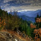 It's What We See That Counts by Charles & Patricia   Harkins ~ Picture Oregon