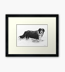 Dog in Water - Boarder Collie Framed Print