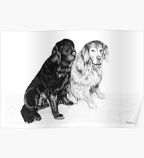 Charlie and Alfie - Golden Retrievers Poster