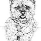 Westie - West Highland Terrier by Paul Stratton