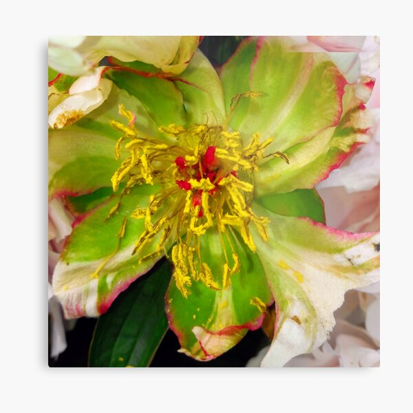 Rest of a Flower Metal Print
