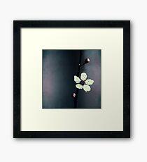 cherry blossom flower Framed Print