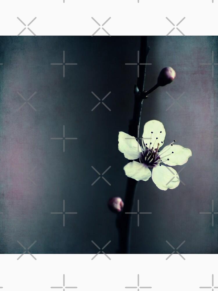 cherry blossom flower by Ingz