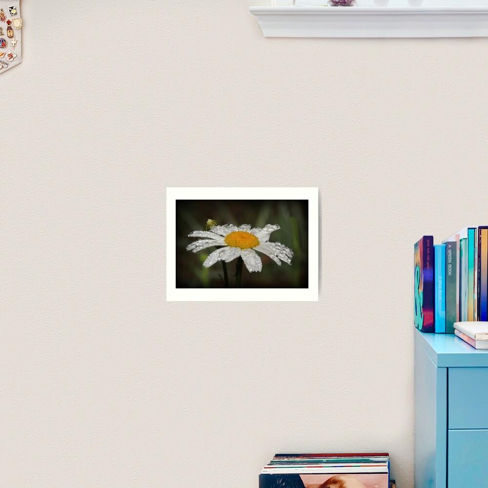 Daisy with dew drops Art Print