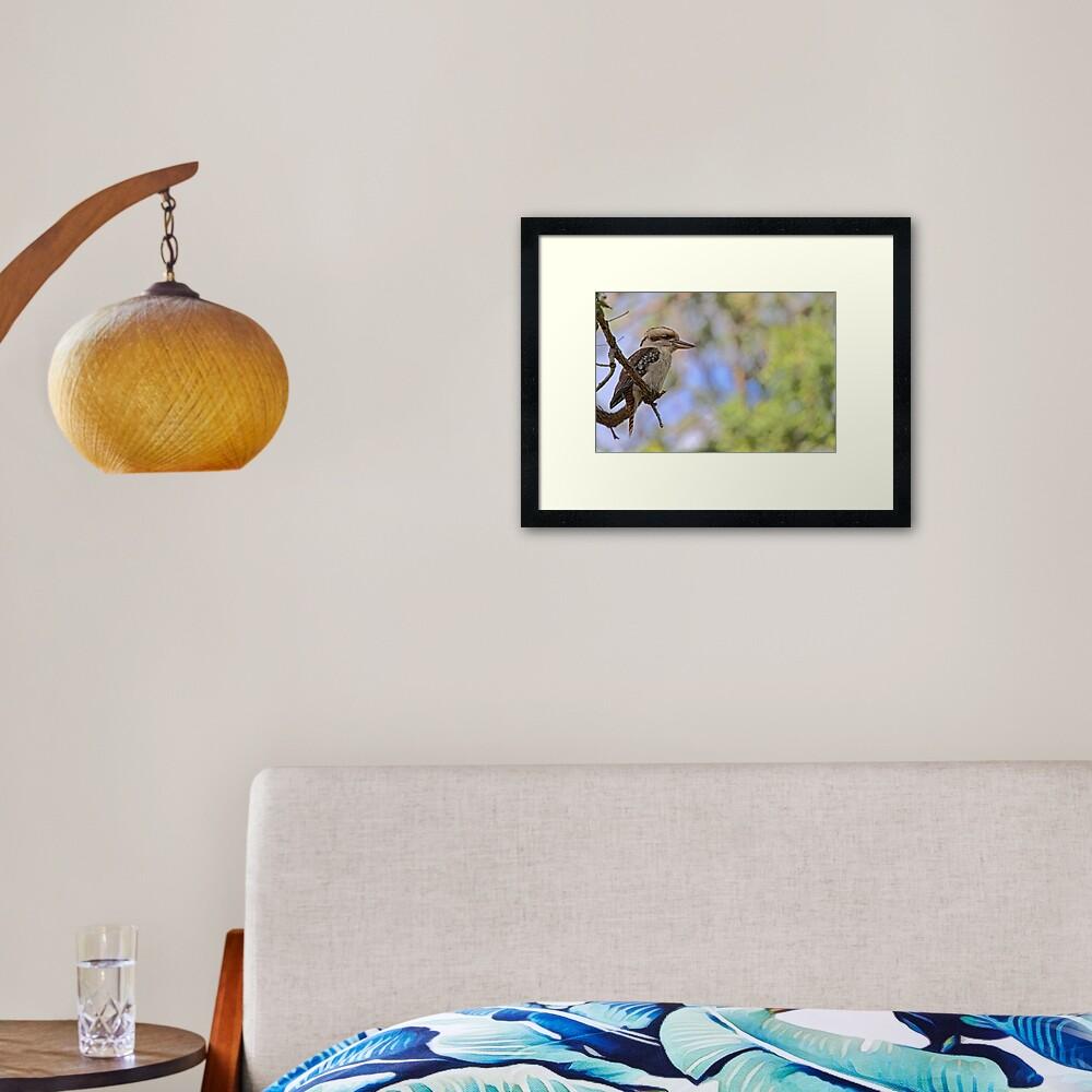 Kookaburra Watching Framed Art Print