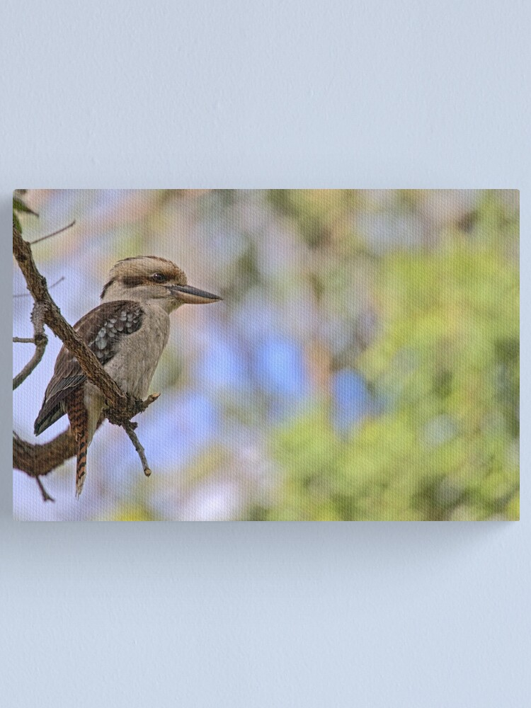 Alternate view of Kookaburra Watching Canvas Print