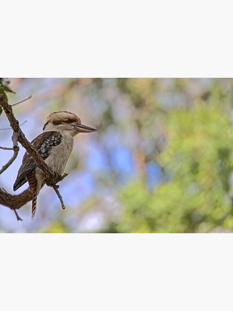 Kookaburra Watching by theoddshot