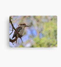 Kookaburra Watching Metal Print