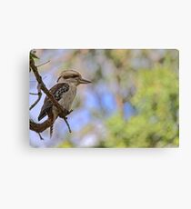 Kookaburra Watching Canvas Print