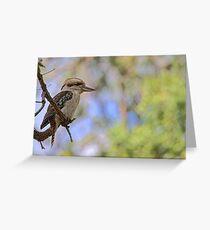Kookaburra Watching Greeting Card