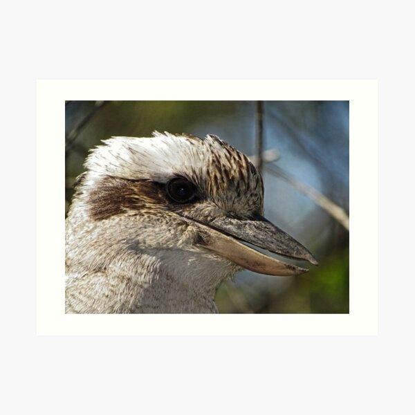 Kookaburra Portrait Art Print