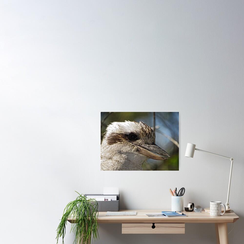 Kookaburra Portrait Poster