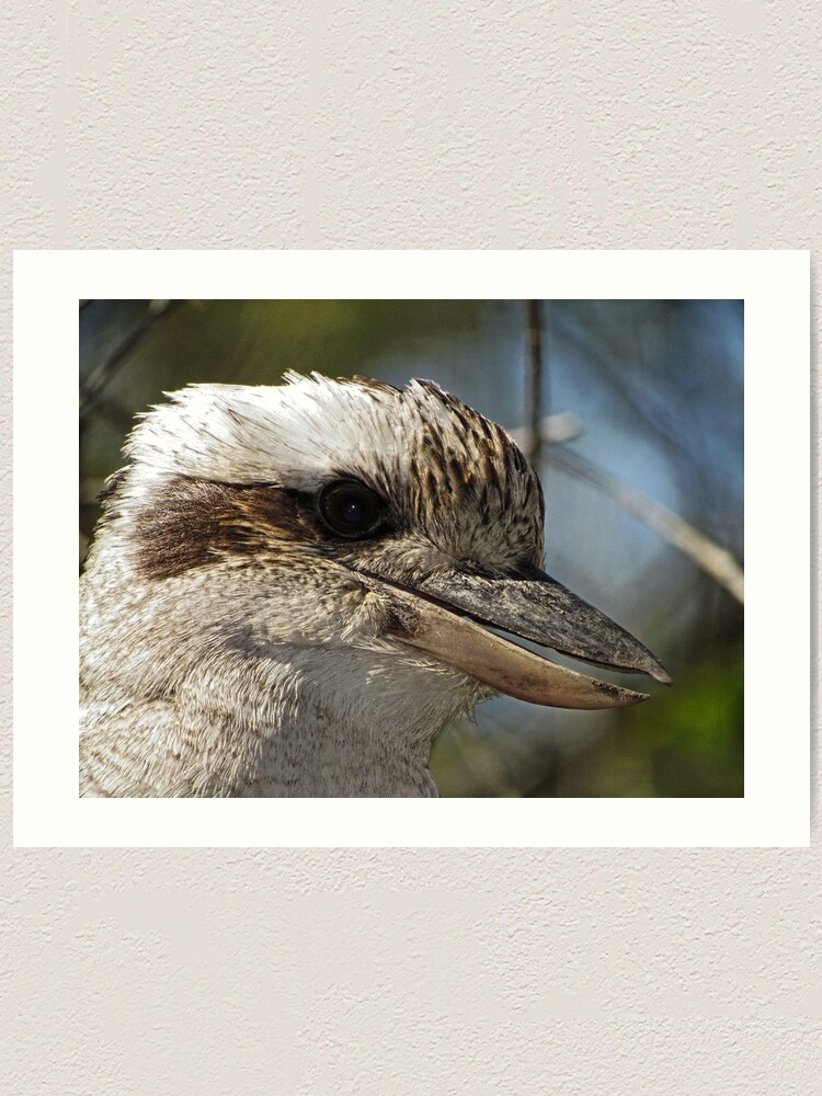 Alternate view of Kookaburra Portrait Art Print