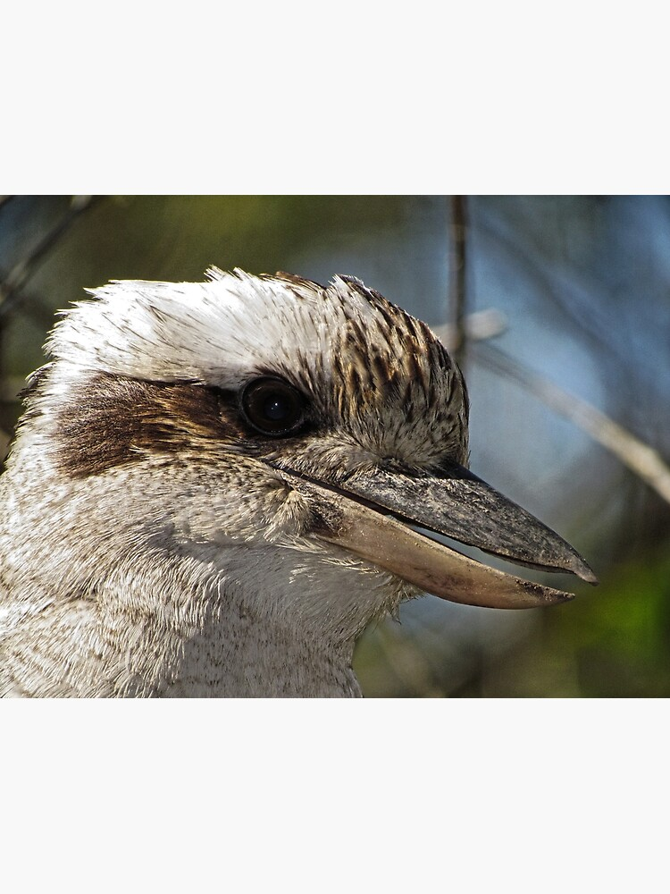 Kookaburra Portrait by theoddshot