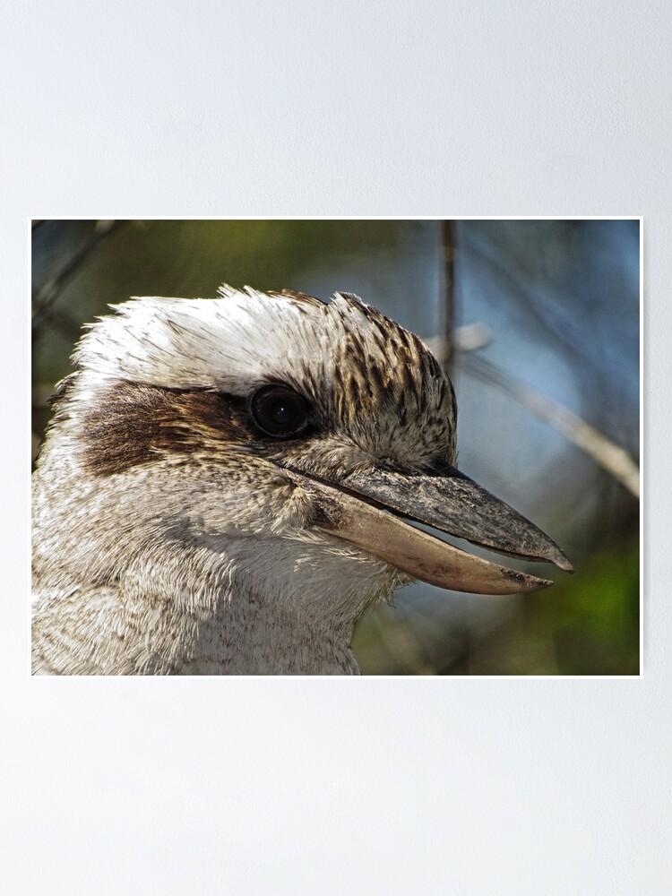 Alternate view of Kookaburra Portrait Poster