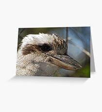 Kookaburra Portrait Greeting Card