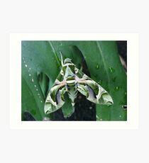 Oleander Hawk Moth Art Print