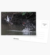 Take off!   Postcards