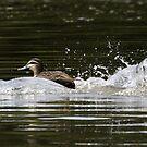 Splashdown!   by Trevor Farrell