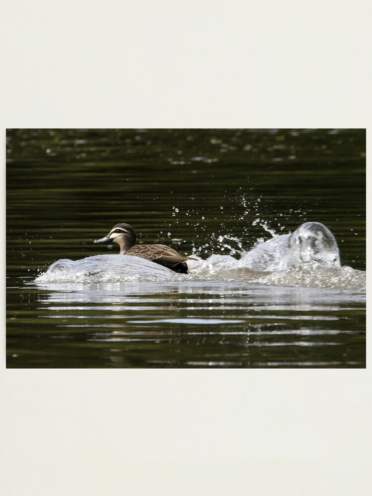 Alternate view of Splashdown!   Photographic Print