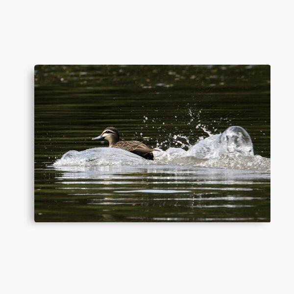 Splashdown!   Canvas Print