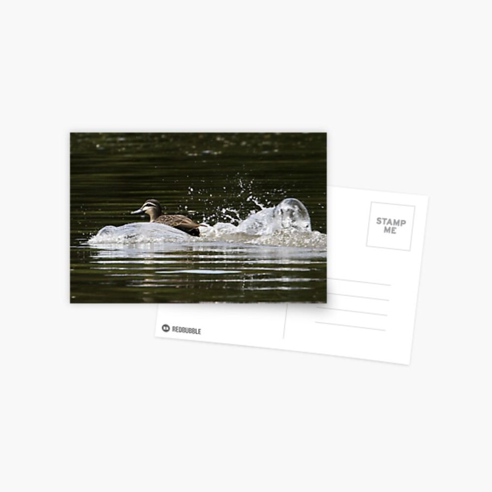 Splashdown!   Postcard