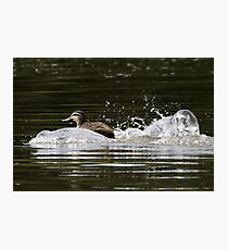 Splashdown!   Photographic Print
